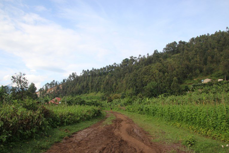 Green Kisoro area