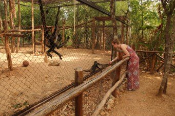 You could give the monkeys little candies which you could buy. One spider monkey didn't want to let go of my hand.